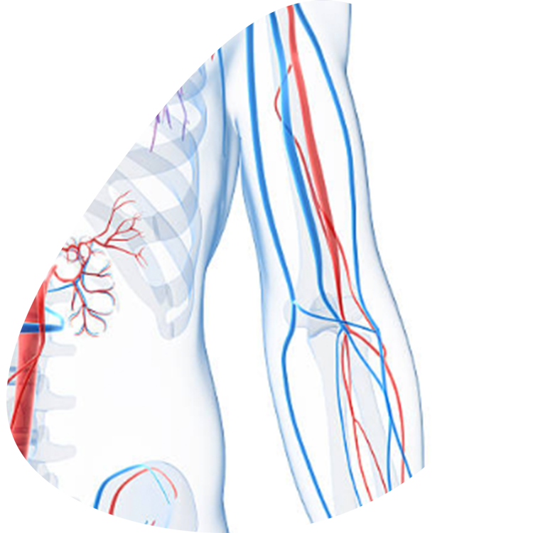 vascular-factors